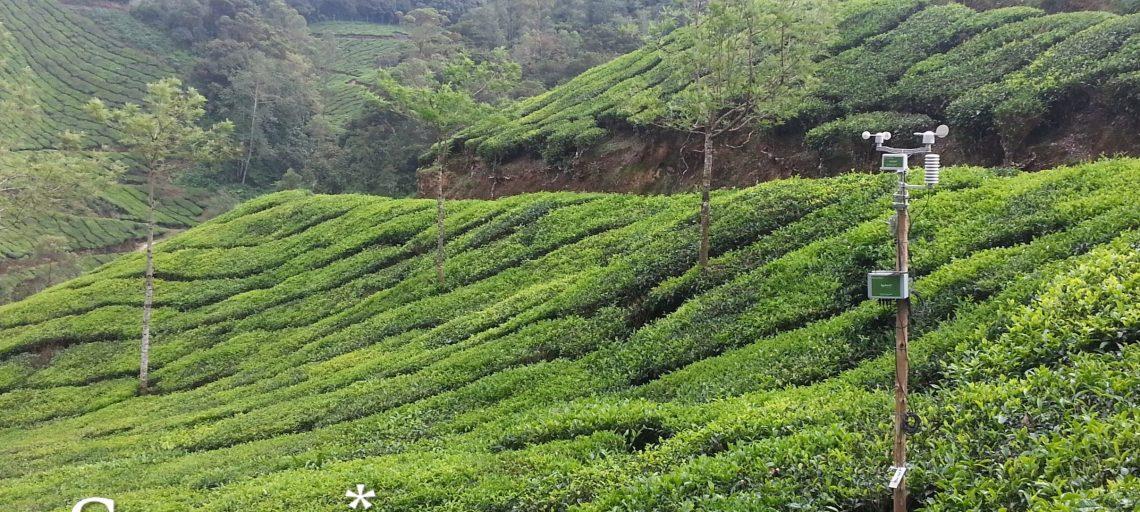 New SynField Installation at Tea Plantations in Kerala, India