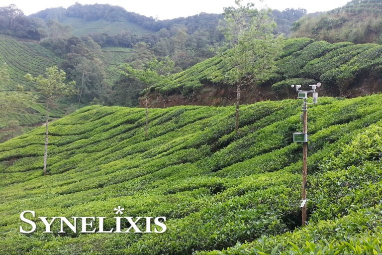 New SynField Installation at Tea Plantations in Kerala, India