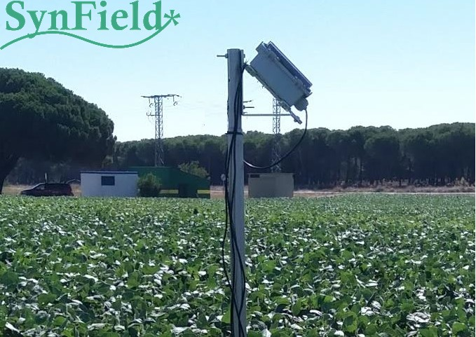 Optimal control of irrigation in cultivation of soybeans (Spain)