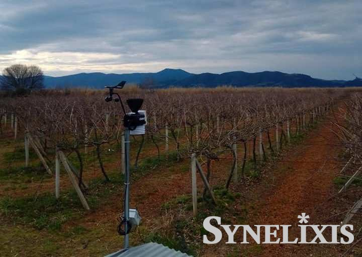 SynField Installation in Kiwi crop in Agrinio, Greece